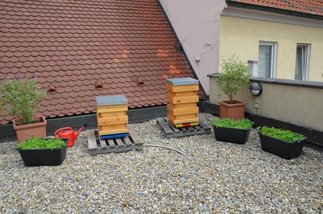 An der Begrünung unserer Dachterrasse arbeiten wir Tag für Tag fleißig, wie unsere Bienen