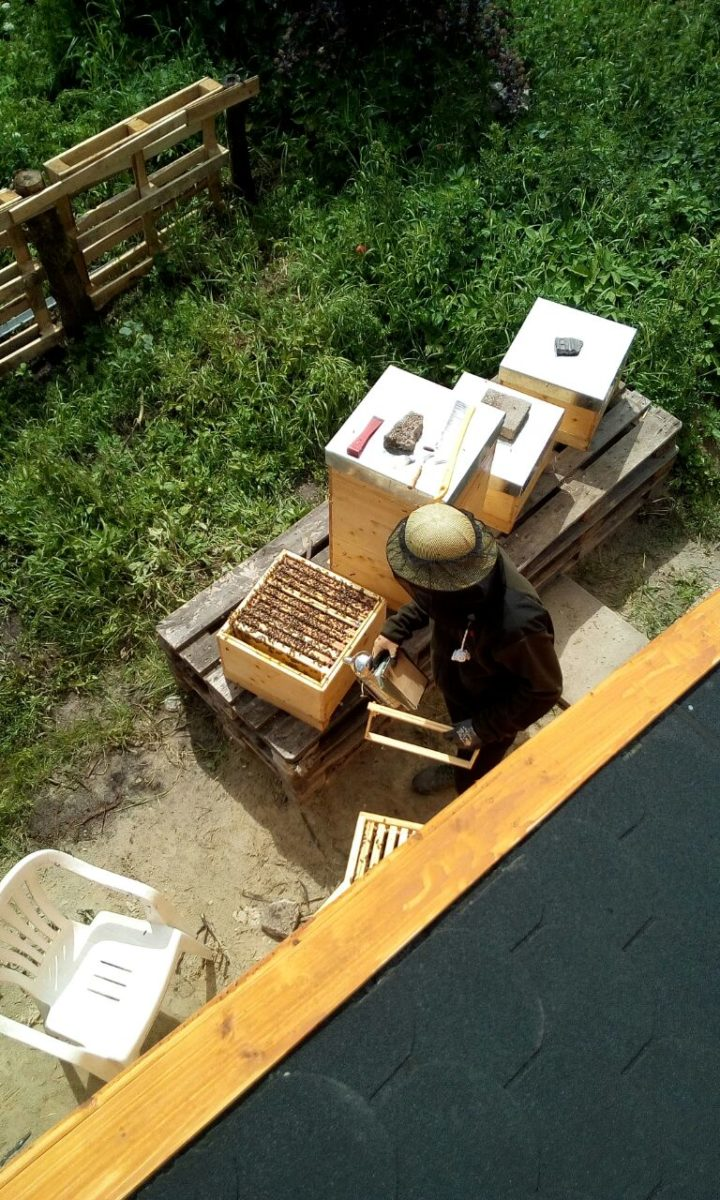 Die Bienen dürfen natürlich nicht zu kurz kommen. Kleine Durchsicht von unserem Jung-Imker Miche ...
