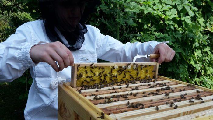 Der erste Honig ist eingelagert worden