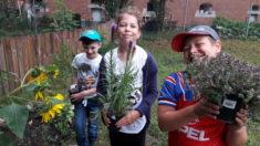 Jetzt gibt es bei uns Sonnenblumen, verschiedene Heckenrosen, einen Schmetterlingsbaum, Lavendel ...