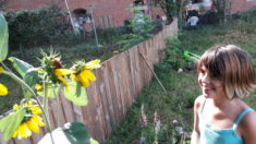 An einigen Pflanzen konnten wir schon Bienen beobachten!