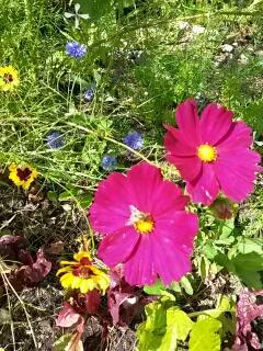 Endlich ist es soweit: die ersten Blumen blühen
