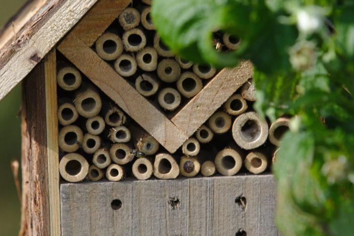 Unterschlupf mit Biene im Anflug