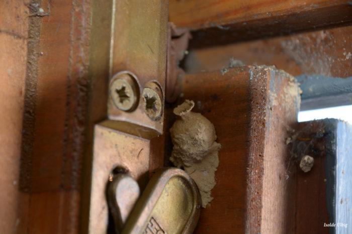 Krugförmiger Bau einer Tönnchenwespe im selben Türrahmen. – ausser Konkurrenz –