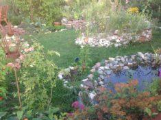 Teich bepflanzt mit Blutweiderrich Wasserdost Karthäusernelke alles noch recht klein weil erst g ...