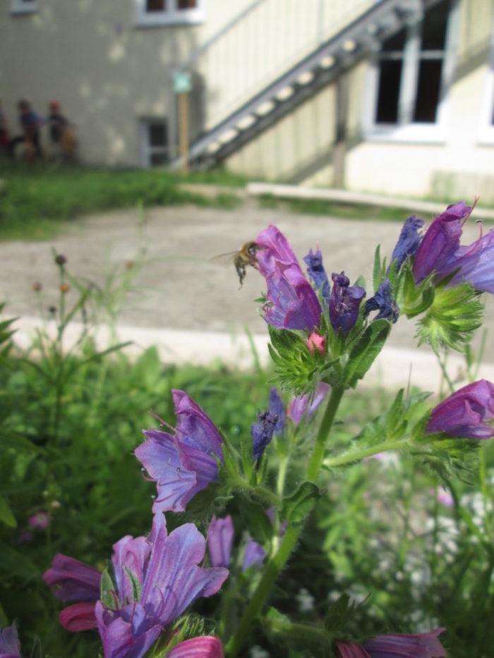 Immer mehr Bienen besuchen uns