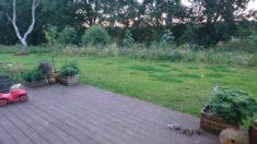 Unser Schmetterlings-, Hummel-, Käfer- und Bienen-Naschgarten :)