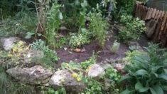 Fertisch – Kräuter Stauden Beet