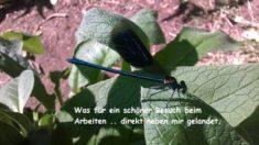 Libellen Besuch – die wissen auch wo es schön ist!