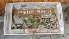 Hortus Pusilli