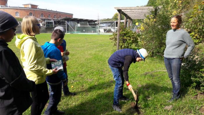 Es ist Ende September: wir pflanzen Krokusse und Schneeglöckchen für leere Bienenmägen im Frühling!