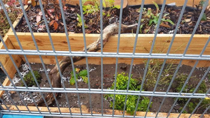 Linke Seite Pflanzkasten mit Totholz