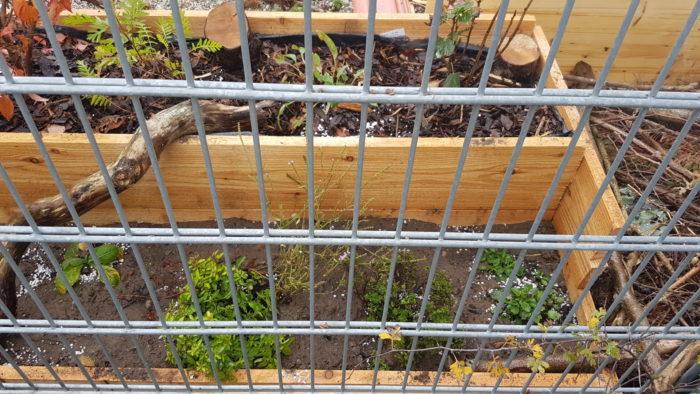 Pflanzkasten rechts: Blühende Pflanzen im September.