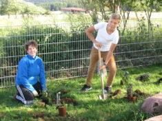 27.07.2017 Endspurt im Schulgarten sind 20 qm neu bepflanzt Wir sehen vor lauter Beeren den Schu ...