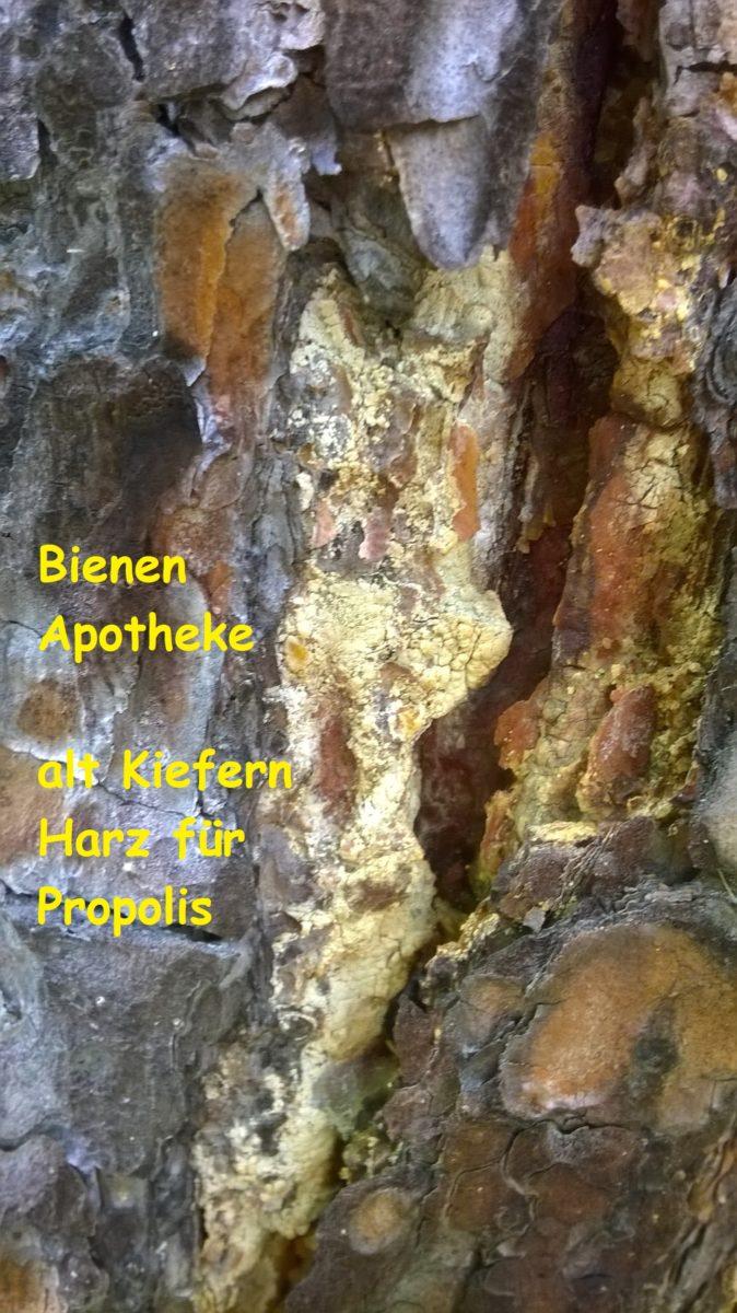 Bienenapotheke Propolis