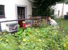 Besucher im Insektenhotel