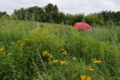 3. Ein Ausflug zu einer Naturwiese