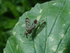 Insekt sitzt auf einem Blatt