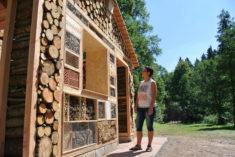 Insektenhotel im XXL Format – ein Zuhause für sehr sehr viele Insekten