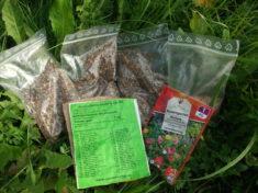 Samen für Bienenweide