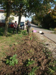 13 m Beet waren länger als wir dachten zum pflanzen.