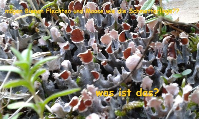 So schön in der Wiese eine Blattflechte???