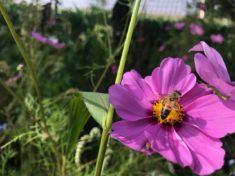 Bienen zu Besuch