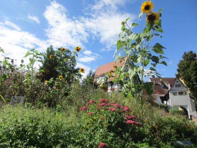 Endspurt der Sommerblumen am Beet