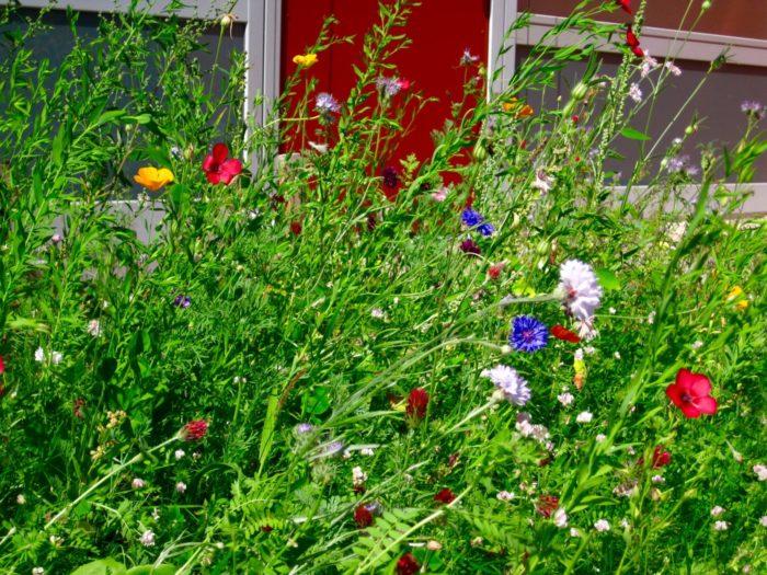 Die Blumenwiese im Sommer 2017