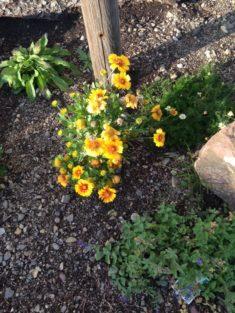 28.09.2017 Herrlich leuchtende Blüten im Summgarten