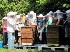 Ein Herz und Platz für Honigbienen
