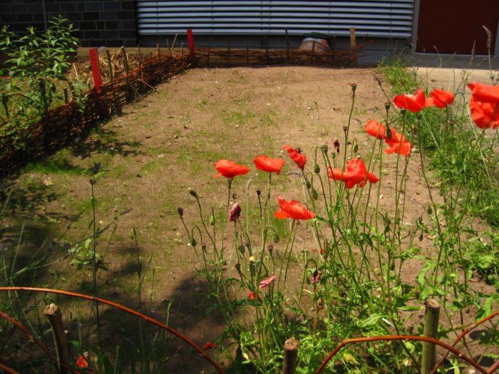 Frisch eingesäte Blumenwiese mit eigenem Weidenzaun