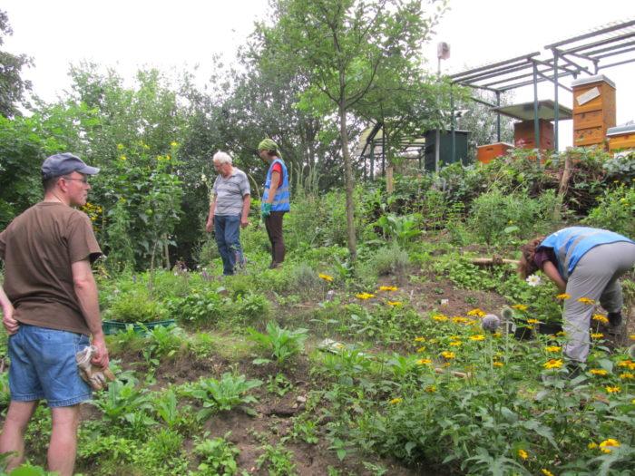 Das Team in Aktion (2/4): Es wurden Dahlien, Garten-Storchschnabel…