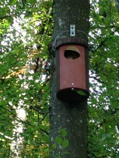 Hotzenwald: Statt Waldkauz – ein Hornissen-Schwarm