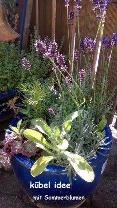 Lavendel und Sommerblumen !