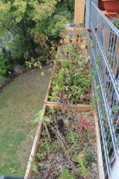 September: Zweite Runde Blühpflanzen verblüht.