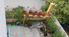 Juli: Kornblumen und Mohn, Gesamtansicht