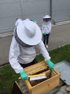 Ein Auszubildender öffnet den Bienenstock