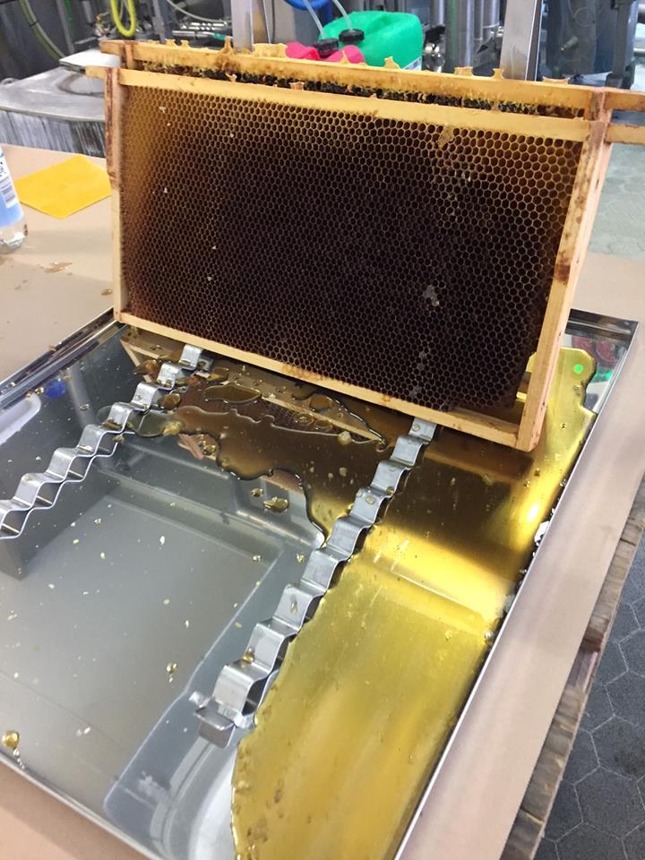 Abtropfen der Honigwaben