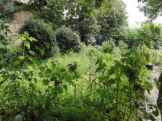 Der Garten nach den Ferien…