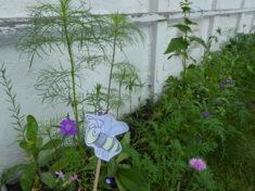 """Biene Glubsch: """"Blütenpraaaaacht"""""""