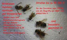 """Wildbienen, Hummeln, Hornissen und Wespenarten sind """"besonders geschützt"""" ."""