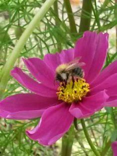 Heutige Biene Nr. 2