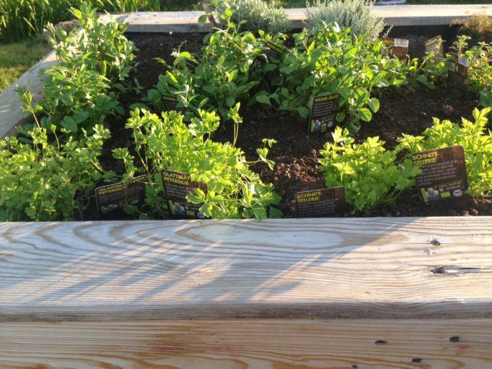 17.07.2017 Ein Blick in unsere Hochbeete. Die Pflanzen wachsen prima an. Nun legen mit dem Giesd ...