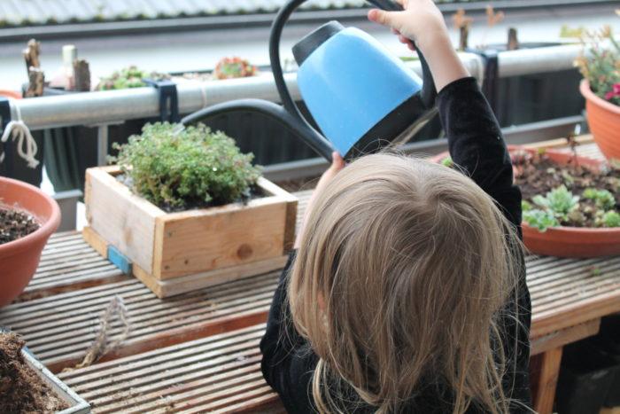 Pflanzen ins Substrat setzen und gießen