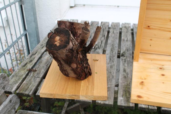Thujastück zu Totholz