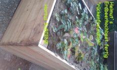 Hochbeet Erdbeeren im Hortus