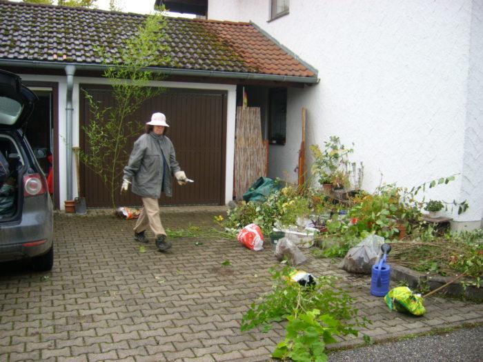 viele Sträucher ausgegraben aus dem Garten für eine Wildhecke