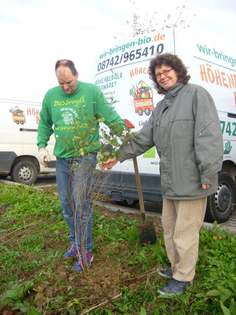 Heckenpflanzung beim Biomarkt