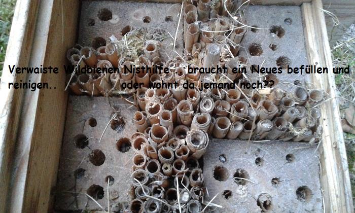 Das ist eine alte Nisthilfe die nicht mehr zu gebrauchen ist da ev Pilze oder auch kaputte Röhre ...